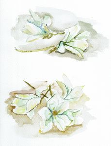 Withering white flowers