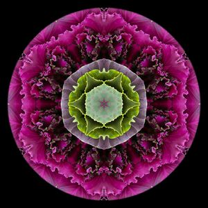 Kale Mandala