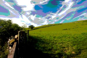 Field edge, Yorkshire