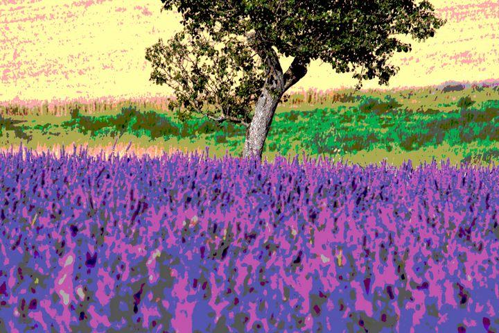 Lavender field, Provence, France - Nicholas Rous