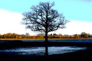 Lone oak tree in a flooded meadow