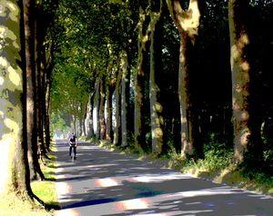 Avenue of trees near Vaux le Vimcomt