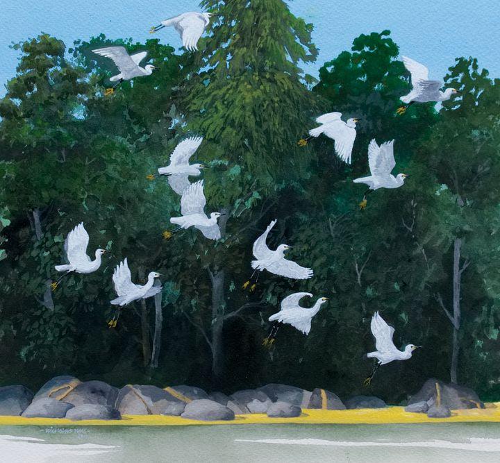 Little Egrets, River Tywi, Wales - Nicholas Rous