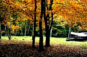 Autumn in the Savernake Forest