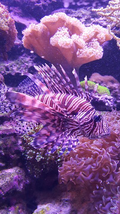 Aquarium - Lion Fish in Pink - Audra D. Valdez