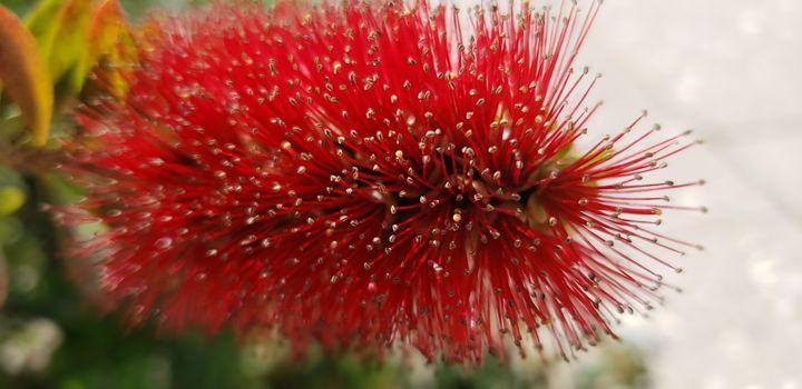 Peaking Bloom in the Desert - Audra D. Valdez