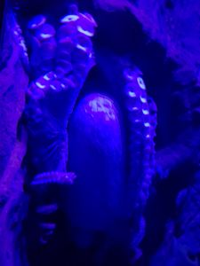 Octopus Hanging Out