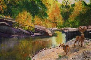 Deer roaming by a Texas creek