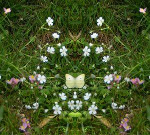 Butterfly in Floral Arrangement
