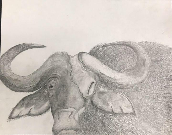 Water Buffalo graphite drawing - Tyriaunna's art