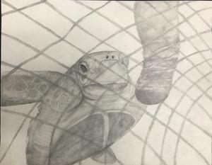 Sea turtle graphite drawing