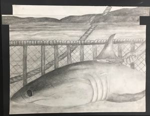 Shark finning graphite drawing