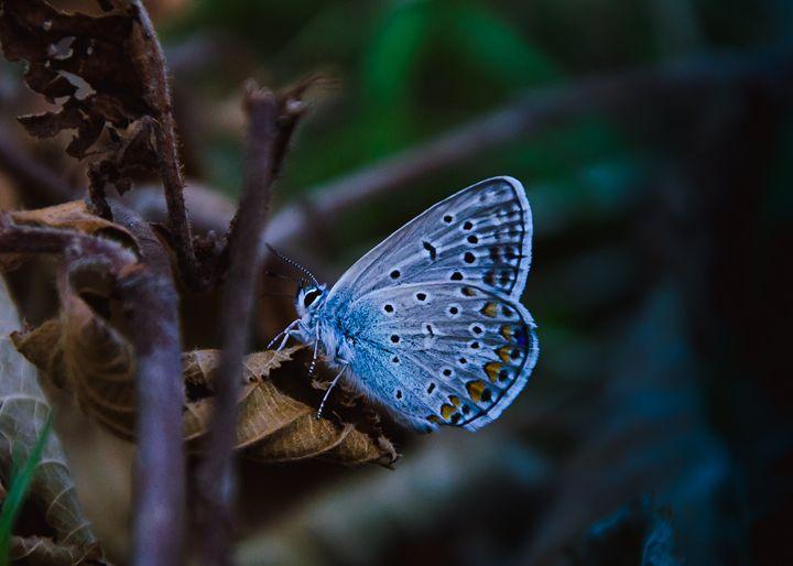 Butterfly - Andra Tudoran