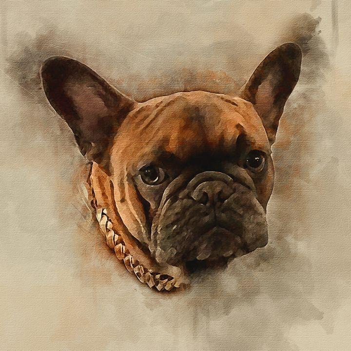 Boston Terrier - Keith R Furness