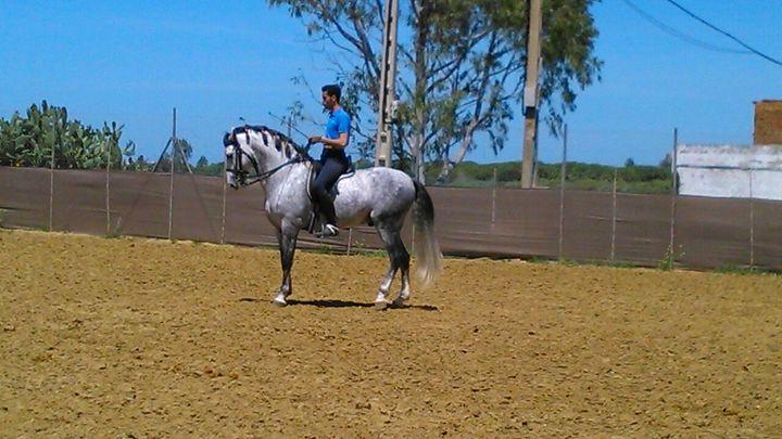 Spanish purebred horse - BlueSky Photographies