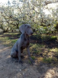 Dog in spring - BlueSky Photographies