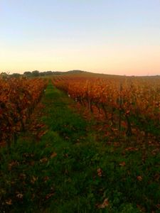 Autumn evening arising over vineyard