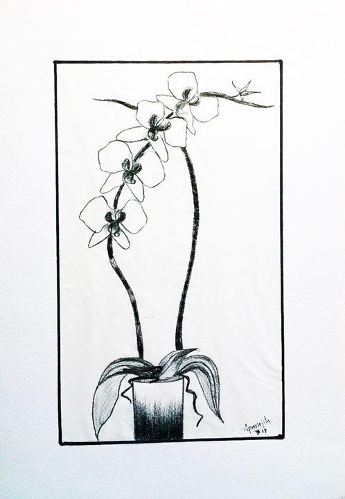 Orchids - Saaz Arty