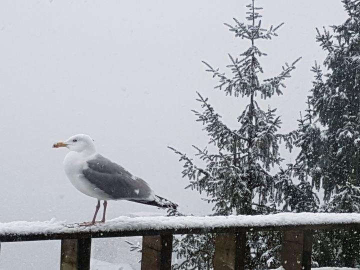 Winter - Saaz Arty