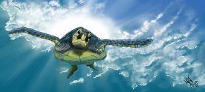 The Turtle Dive