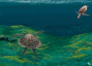 Sea Turtle Cruise