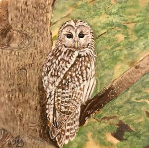 Ural Owl - Fine Art by Evelyn Hernandez