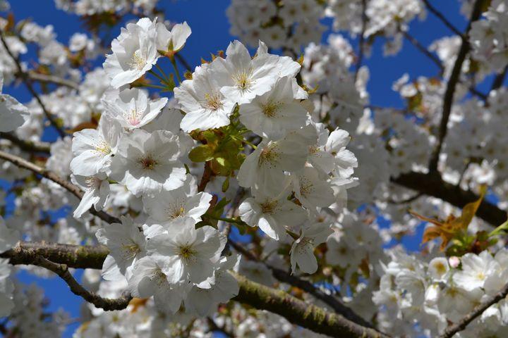 Blossom - Irina Ushakova