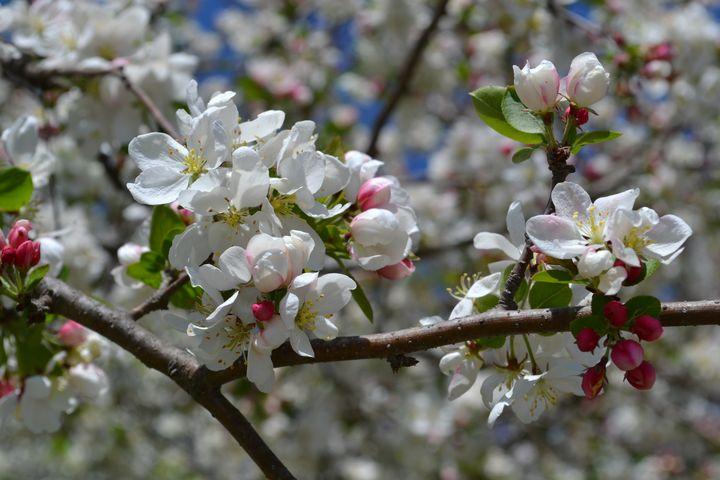 Blossom 2 - Irina Ushakova