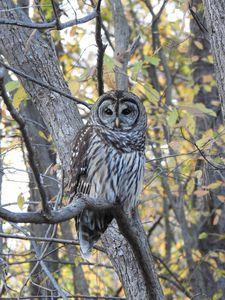 Owl - Irina Ushakova
