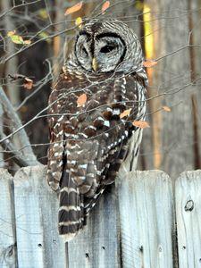 Owl 2 - Irina Ushakova