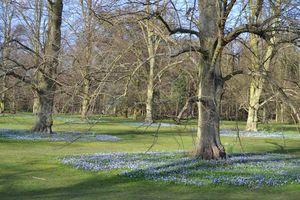 Spring in an old park - Irina Ushakova