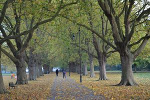 Autumn park - Irina Ushakova
