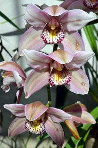 Orchid - Irina Ushakova