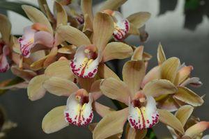 Orchid 2 - Irina Ushakova