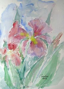 Charming Iris
