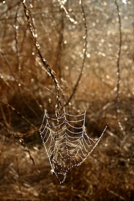 spiders - P. Rousseau Fine Art Phoyography
