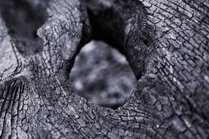 Hole in a tree