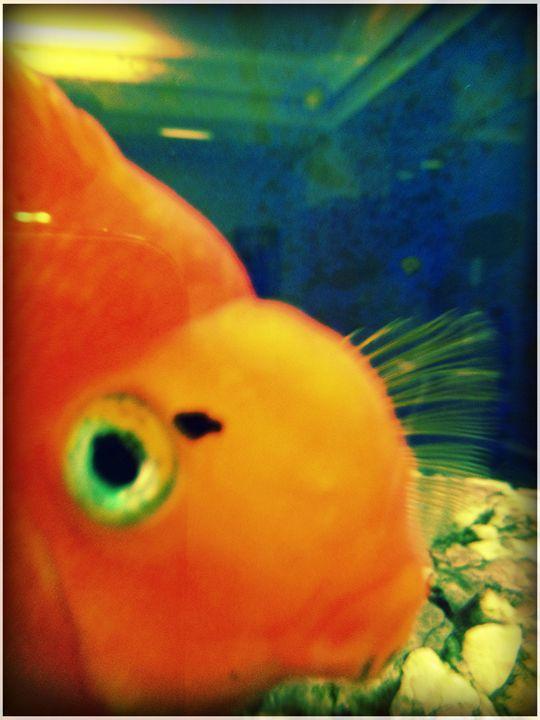 Fish eye - Pixie