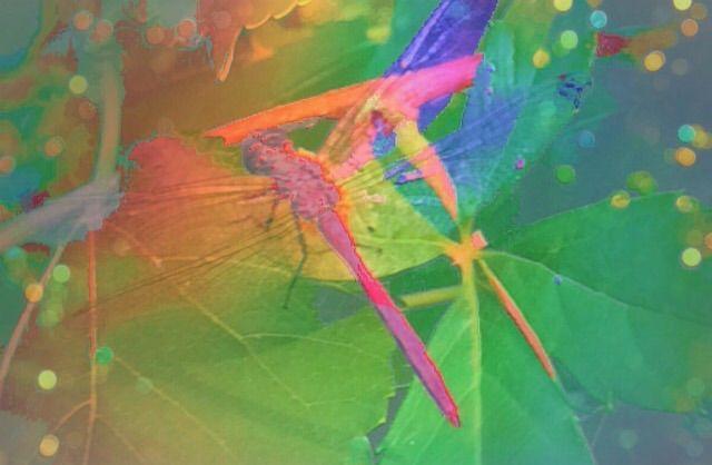 dragonfly - Pixie