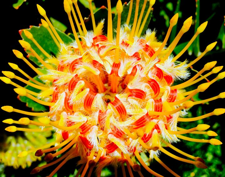 Tropical Flower - B's Fine Arts