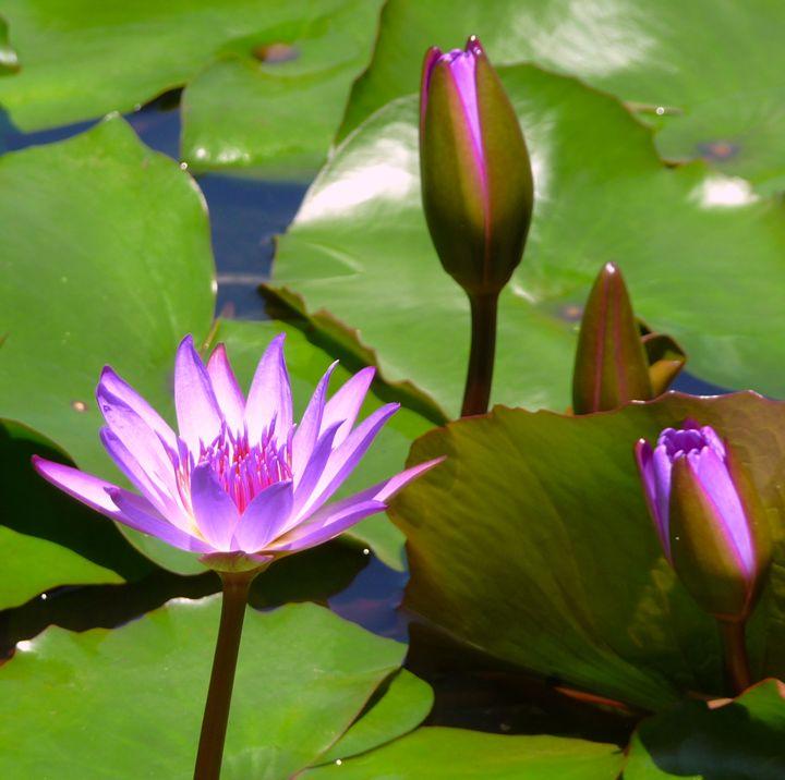 Lilies - B's Fine Arts