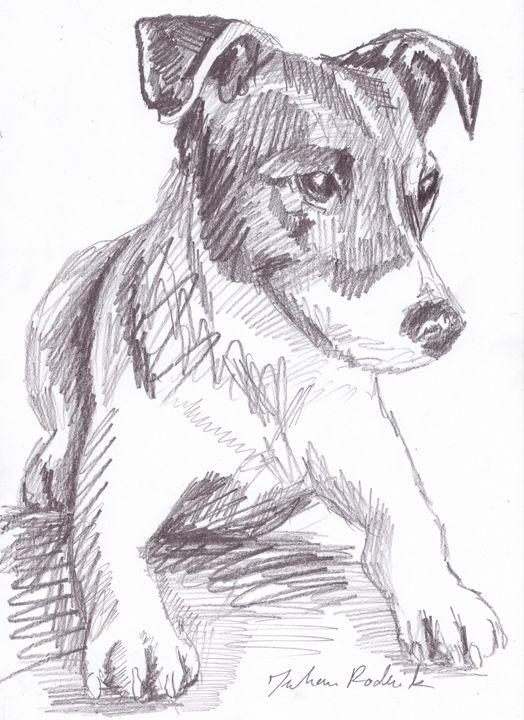 Jack Russell Terrier - Juhan Rodrik
