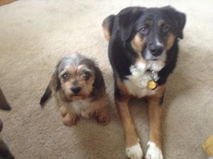 Two good friends - Mac,s gallery