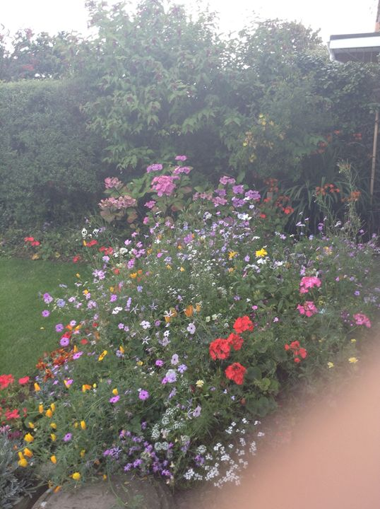 Wild garden - Mac,s gallery