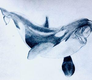 The Aquatic King