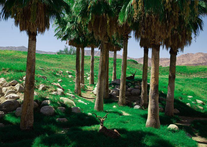 Green Desert Zoo - Simbayu Studios