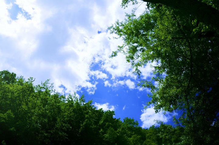 Woods - MiroslavJJ