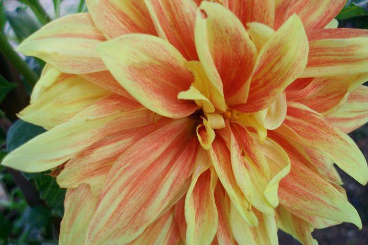 yellow - orange flower 2 - Savina