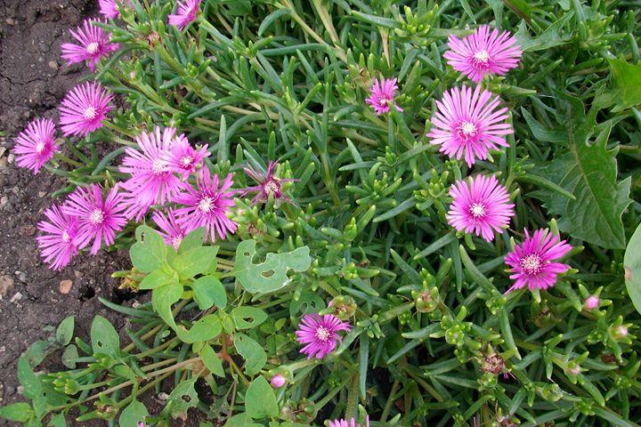 Flower garden - Savina