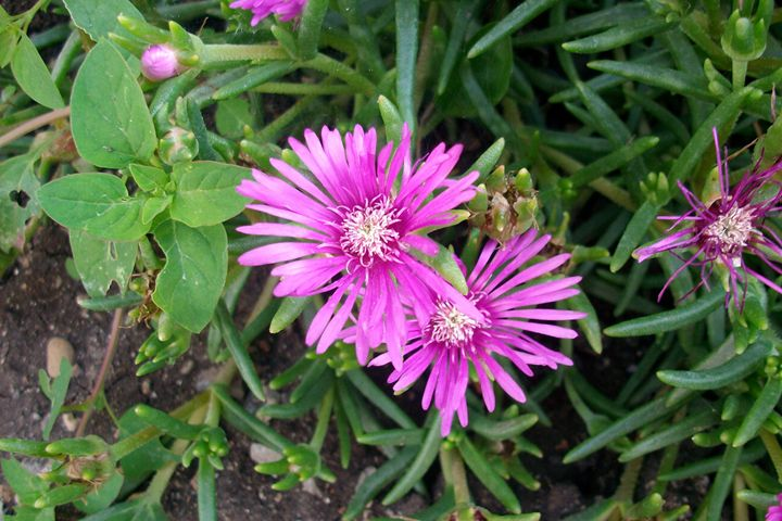 Flower5 - Savina